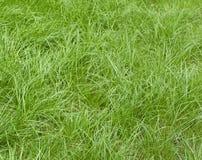 Fresh green grass Stock Photos