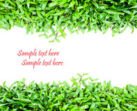Fresh green grass. With space for your text Stock Photo