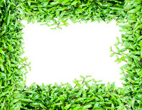 Fresh green grass. With space for your text Stock Photography