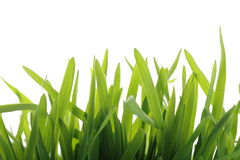 Fresh green grass Royalty Free Stock Photos