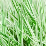 The fresh green grass Royalty Free Stock Photography