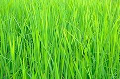 Fresh green grass Stock Images