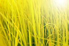 Fresh green grass Royalty Free Stock Photography