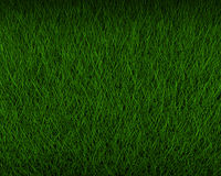 Fresh green grass Stock Photography