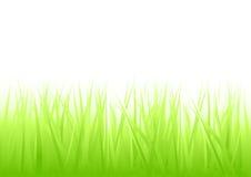 Fresh Green Grass vector illustration