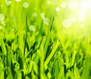 Fresh green grass abstract background Stock Photography