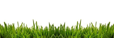 Fresh green grass as border on the lower side of the horizontal frame in a seamless empty white background stock image