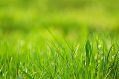 Fresh green grass as spring season background Royalty Free Stock Photography