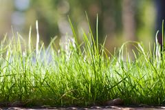 Fresh green grass background Stock Image