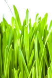 Fresh green grass background Royalty Free Stock Images