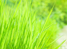 Fresh green grass background Stock Photos