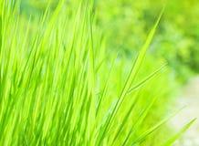 Fresh green grass background Stock Photos