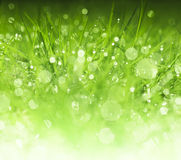 Fresh green grass background. Dew drops on fresh spring grass on a spring morning Royalty Free Stock Photos