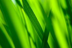 Fresh green grass background. Macro background abstraction Royalty Free Stock Photos