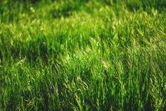 Fresh green grass Royalty Free Stock Image