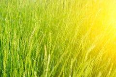 Fresh green grass background. Stock Photo