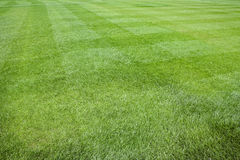 Fresh green grass backgrounds Royalty Free Stock Photography