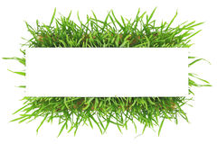 Fresh green grass banner Royalty Free Stock Images