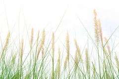 Fresh green grass in beautiful meadow Royalty Free Stock Photography