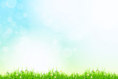 Fresh green grass with blue bokeh and sunlight. Beauty natural b. Fresh green grass with blue bokeh and sunlight and flowers. Beauty natural background Stock Photo
