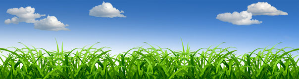 Fresh green grass and blue sky. With clouds Royalty Free Stock Images