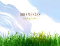 Fresh green grass and blue sky. Vector illustration. Fresh green grass and blue sky. Vector illustration Royalty Free Stock Photo