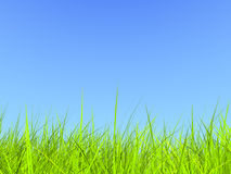 Fresh green grass on blue sunny sky background. (3d render Stock Photography