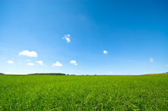 Fresh green grass with bright Royalty Free Stock Photos