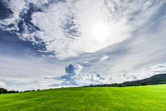 Fresh green grass and bright sky. The landscape. The grass green and the sky is bright, which is landscape Royalty Free Stock Photography