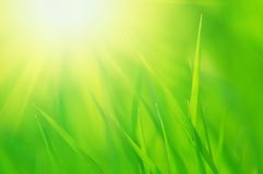 Fresh green grass and bright sun Stock Photography