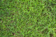 Fresh green grass close up background texture Stock Photography