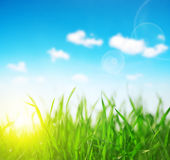 Fresh green grass closeup. Royalty Free Stock Photography
