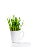 Fresh green grass in coffee cup Stock Photo
