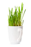 Fresh green grass in coffee cup Stock Photography