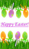 Fresh green grass and colored easter eggs Stock Image