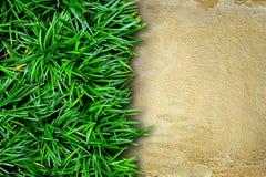 Fresh green grass and concrete Stock Photos
