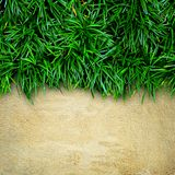 Fresh green grass and concrete Royalty Free Stock Image