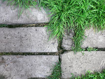 Fresh green grass on concrete background Royalty Free Stock Photo
