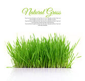 Fresh green grass with copy-space Royalty Free Stock Photos