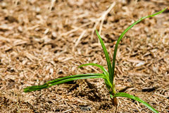 Fresh green grass. Stock Photo