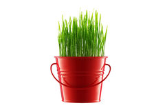 Fresh Green grass in decorative pot isolated on white Royalty Free Stock Photography