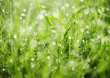 Fresh green grass with dew. Stock Photos