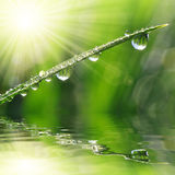 Fresh green grass with dew drop closeup Stock Images