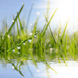 Fresh green grass with dew drop closeup. Stock Photography