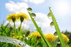 Fresh green grass with dew drop closeup. Stock Photos