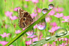 Fresh green grass with dew drops and butterfly Royalty Free Stock Images