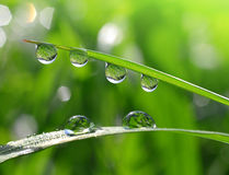 Fresh green grass with dew drops Royalty Free Stock Image