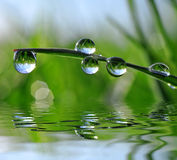 Fresh green grass with dew drops Stock Photo