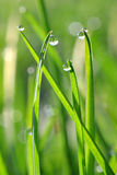 Fresh green grass with dew drops closeup. Stock Image