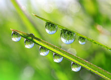 Fresh green grass with dew drops closeup Stock Images
